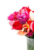 Bunch of red and pink tulips over white — Stock Photo