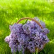 Bouquet of lilac on green grass — Stock Photo