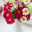 Daisies on windowsill — Stock Photo