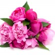 Bunch of pink peonies isolated on white background — Stock Photo