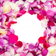 Rose petals of different colors isolated on white — ストック写真