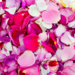 Rose petals of different colors — Stok fotoğraf