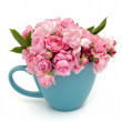 Blue cup full of small pink roses over white — Stock Photo #28574449