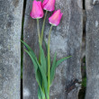 Tulips on wooden table — Foto Stock
