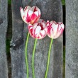Colorful tulips on wooden background — Foto Stock