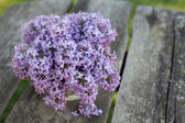 Lilac on wooden table — Stock Photo