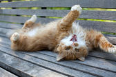 Cat on wooden bench — Stock fotografie