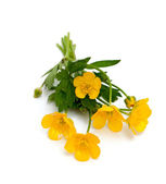 Yellow buttercups isolated on white backround — Stock Photo