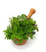 Fresh herbs in wooden mortar — Stock Photo