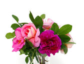 Beautiful roses in a glass vase — Stock Photo