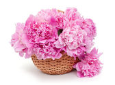 Basket of peonies isolated on white background — Stok fotoğraf
