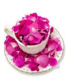 Pink rose petals in a beautiful tea cup — Stock Photo