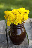Dandelions on wooden garden table — Stock Photo