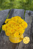 Dandelions in a watering can — Stock Photo