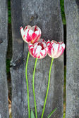 Colorful tulips on wooden background — Stockfoto