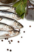 Sprat fish — Stock Photo