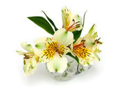 Alstroemeria flowers in a glass pitcher — Stock Photo