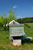 Beekeeper works in his aplary — Stock Photo