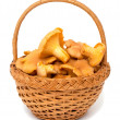 basket with chanterelle mushrooms — Stock Photo