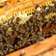 Honey and honey bees working — Stockfoto