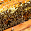 Honey and honey bees working — ストック写真