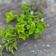 Thyme on wooden table — Stock Photo
