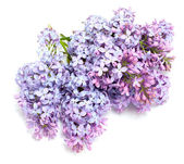 Lila bloem — Stockfoto