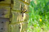 Vuelo de las abejas de miel — Foto de Stock