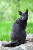 Gato gris es disfrutar de la naturaleza — Foto de Stock