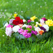 Bowl with different roses on grass — Stock Photo