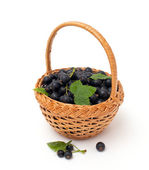 Basket with black currant — Stock Photo