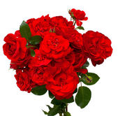 Bunch of beautiful red roses — Stockfoto