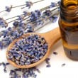 Stock Photo: Dried lavender with a bottle of essential oil over white