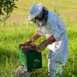 Stock Photo: Beekeeper works at his apiary