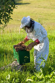 Beekeeper works at his apiary — Stockfoto