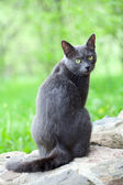 Grey cat is enjoying nature — Stock Photo