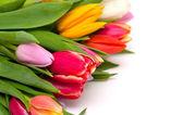 束美丽的白色上孤立的新鲜和多彩郁金香 — 图库照片