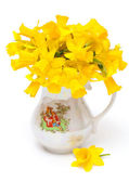 Narcissus flower in vase — Stock Photo