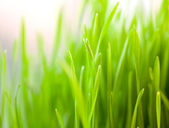 Fresh green grass — Stock Photo