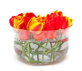 Tulips in glass bowl — Foto Stock