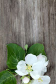 Apple blossoms on wooden surface and empty space for your text — Stock Photo
