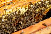 Honey and honey bees working — Stock Photo