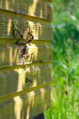 Flying honey bees — Stock Photo