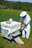 Pszczelarz działa w jego aplary — Zdjęcie stockowe