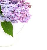 Fiore lilla — Foto Stock