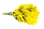 Bunch of mimosa flowers — Stock Photo