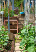 Cucumber plantation in a glasshouse — Stock Photo