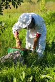 Apicoltore lavora al suo apiario — Foto Stock