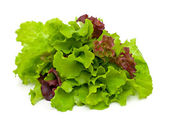 Fresh green and red lettuce isolated on white background — Stock Photo