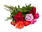 多色のバラの白い背景で隔離の花束 — ストック写真